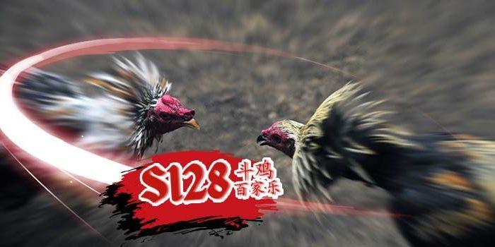 Panduan Mendapatkan Akun Judi Sabung Ayam Online